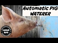 Automatic Pig Waterer mp3