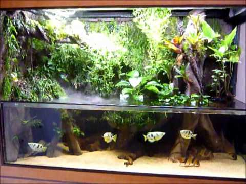 300g paludarium youtube for Aquarium meuble tv