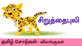 Cheetah (சிறுத்தை புலி) - Animals (விலங்குகள்) - Tamil Spellling (தமிழ் சொற்கள்) - Preschool Kids