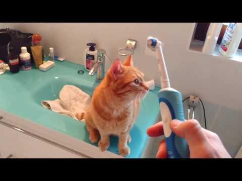 電動歯ブラシのマッサージが大好きな猫