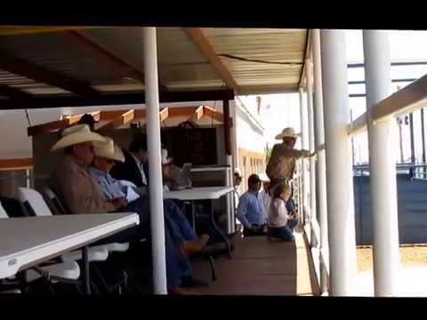 Columbus Livestock Auction May 16 2015 2 of 2