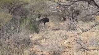 Movies of Botswana Safari in Late June 2013