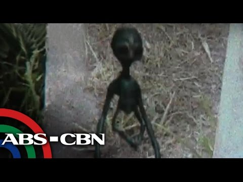 Real or fake? Alien allegedly photographed in Laguna