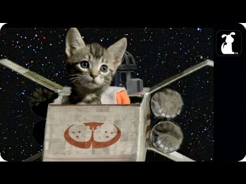 Star Wars Parody - Paw Warz - Trench Run Scene - Petody