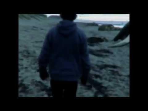 Video Real de Sirena