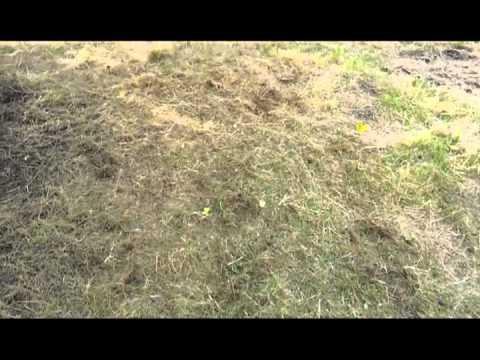 The Garten - Part 6