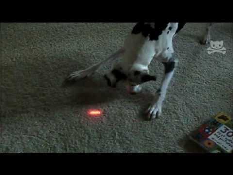 Laser - Bebe y perrito detrás de un laser