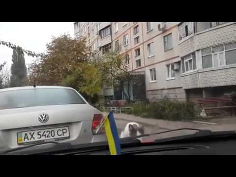 Kedinin cam sileceği ile mücadelesi
