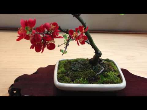 Susquehanna Bonsai Club - Pa Garden Expo 2011,12,13 8