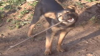 Funny Dogs Will Make You Laugh