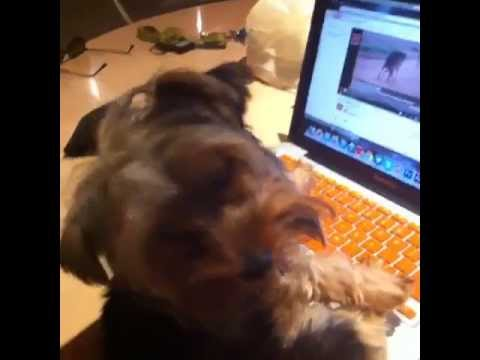 Puppy Watches Dog Porn video
