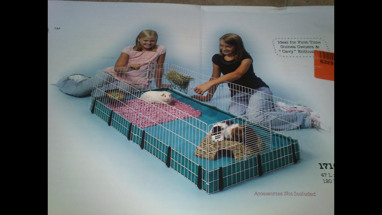 Cute Guinea Pig Cages New Guinea Pig Cage And Pool