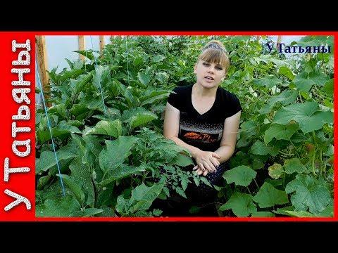 БАКЛАЖАНЫ! СЕКРЕТЫ урожайности БАКЛАЖАНОВ. Удобрение /подкормка/ для баклажанов.