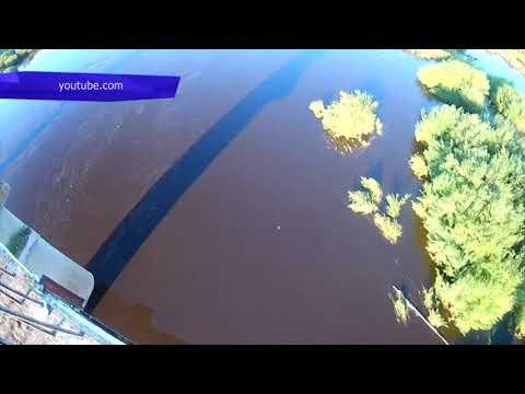 Сводка. Загрязнение Пижмы, замор рыбы. Место происшествия 14.08.2017