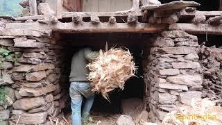 storing the husk    village life    himalayan life style    himalayan culture   