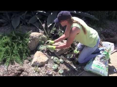 How To Create A Succulent Pocket Garden Youtube