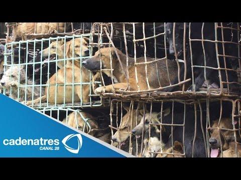 Rescatan en Tlaquepaque a perros encerrados en jaulas de pájaros / Maltrato animal