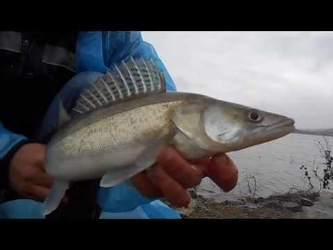 ловля хищной рыбы в запорожье
