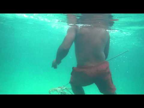 spear fishing in freeport grand bahama
