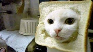 Cat GIF Critique