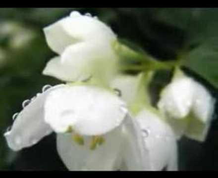 Müziksiz ilahiler 11 – Aglayu Aglayu