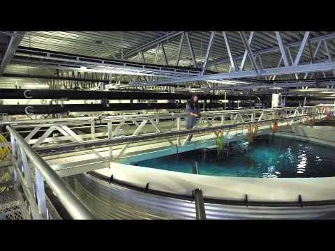 BOC's Aquaculture offering