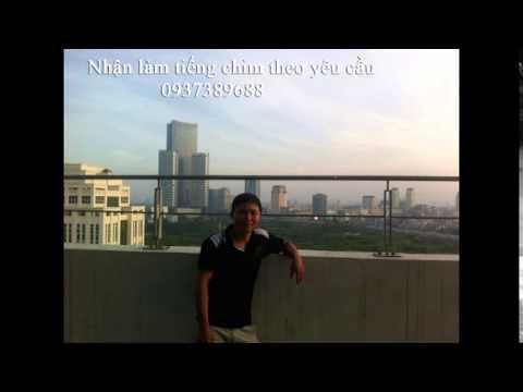 Tieng Chim Trich Co video