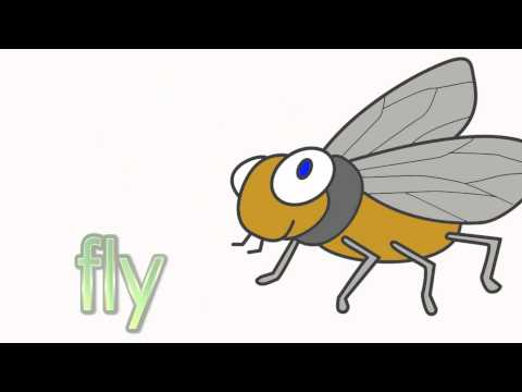 Insects - Talking Flashcards