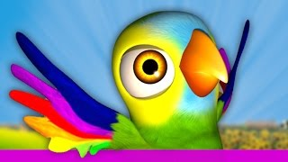 My Parrot Pepe - Songs for kids, Children