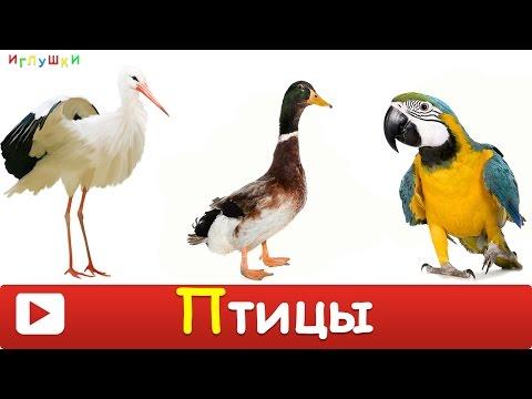 [ ПТИЦЫ для ДЕТЕЙ 1 часть ] с ГОЛОСАМИ. Развивающие ВИДЕО про птиц для детей в HD