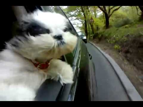 DOG OUT CAR WINDOW.3gp