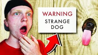 DON'T EVER TRUST THESE DOGS!