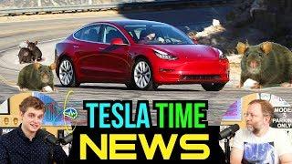 Tesla Time News - Tesla Model 3: Last Bet the Company... and Rats