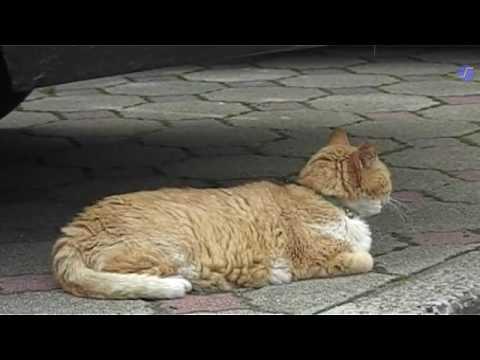 007 猫百景 鳴子篇