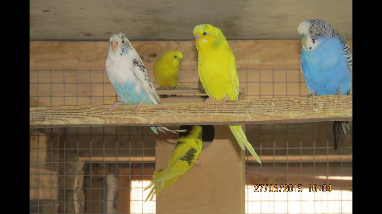 Гнездо (домик) для волнистых попугаев - размеры, фото, купить 23