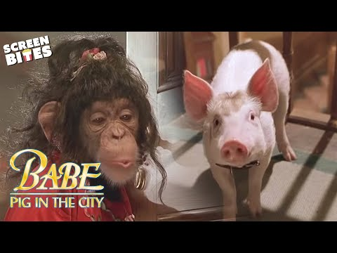Babe: Pig In The City - Maybe it wasn't sheep herding? OFFICIAL HD VIDEO