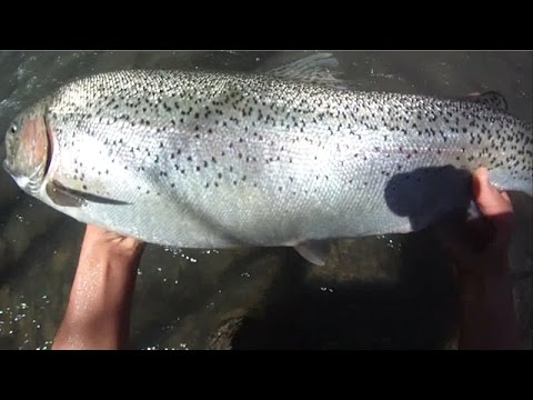 Bait Fishing #73 - Small Stream Fishing for an 8lb Big Rainbow Trout