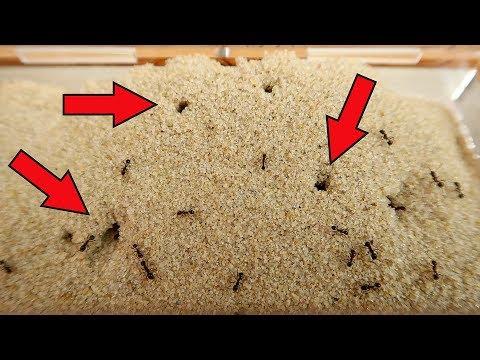 Муравьи вырыли норы в песке! Конкурс: Муравьиная ферма в подарок!