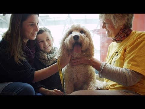 Dog Helps Sick Child - Secret life of Dogs - BBC