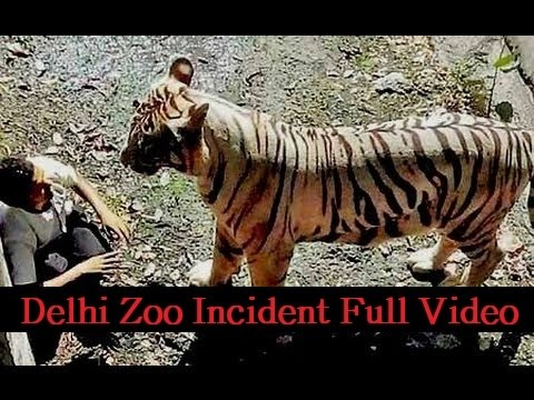 WHITE TIGER ATTACK IN DELHI ZOO: YOUTH ATTACKED BY TIGER IN DELHI ZOO: WHITE TIGER KILLS STUDENT AT DELHI ZOO : TIGER HAS ATTACKED A MAN IN DELHI ZOO LIVE: W...