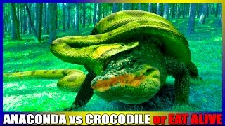 Anaconda vs Crocodile or eat alive