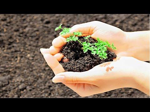 Clique e veja o vídeo Treinamento de Jardineiro - Adubação