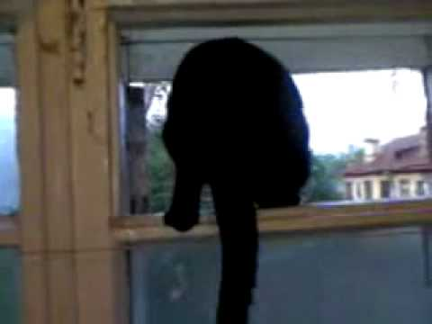 Cat barks like a dog, until it gets found out