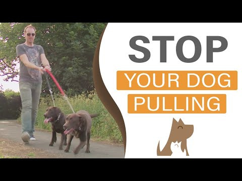 How To Train Your Dog To Heel On A Loose Leash: Dog Training In London (hd) video