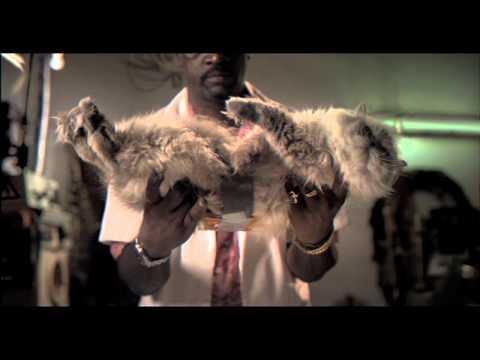 Electricidad - La ley de murphy y los gatos