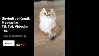 Tik Tok #4 - Sevimli ve Komik Hayvanlar