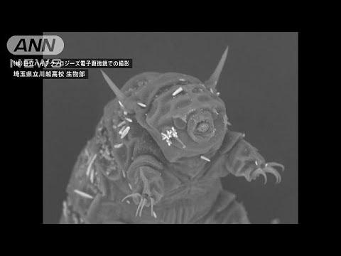 わずか0.2mmの「最強生物」 クマムシの撮影に成功(17/07/31) - YouTube (07月31日 23:47 / 17 users)