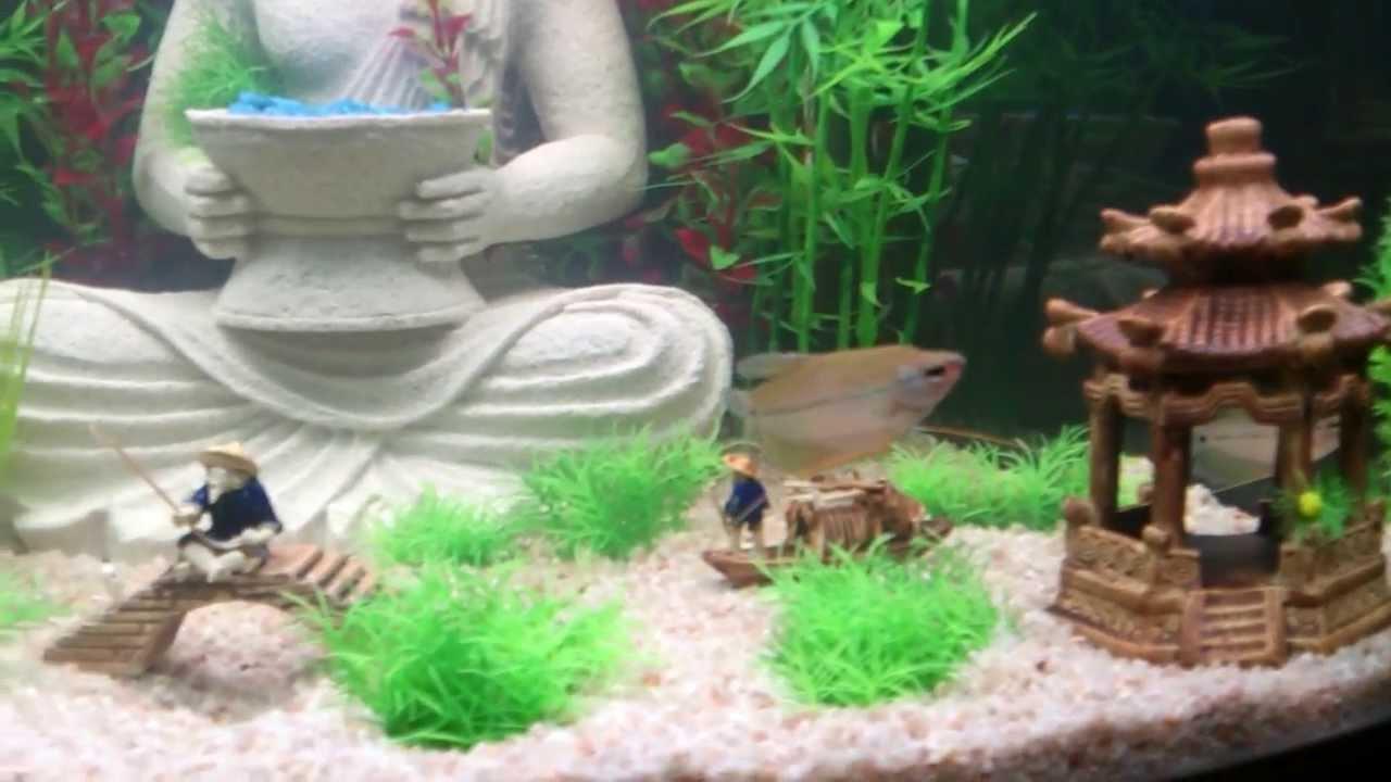 Buddha aquarium youtube for Asian fish tank decorations