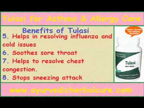 7 Benefits of Tulasi for Asthma & Allergy Care