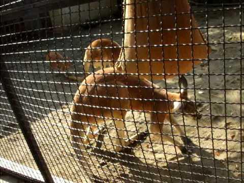 須坂市動物園のハッチ一家